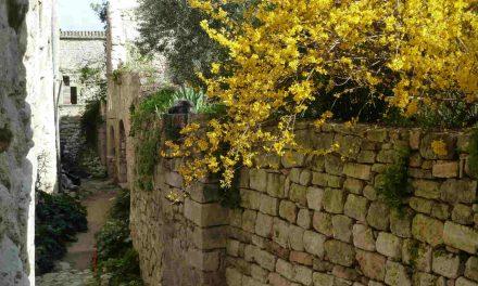 La Provence recomposée, le rôle de la néoruralité